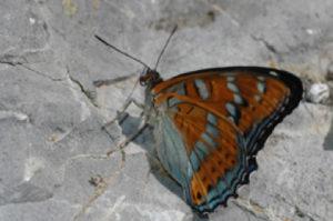 Ouverture du Jardin des papillons de Digne-les-Bains,