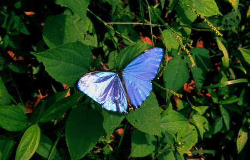 Read more about the article Butterflies of the Sierra Nevada de Santa Marta, Colombia