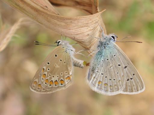Aperçus sur la faune du Tadjikistan