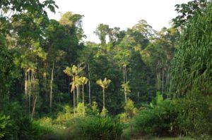 Le Gîte Moutouchi en Guyane