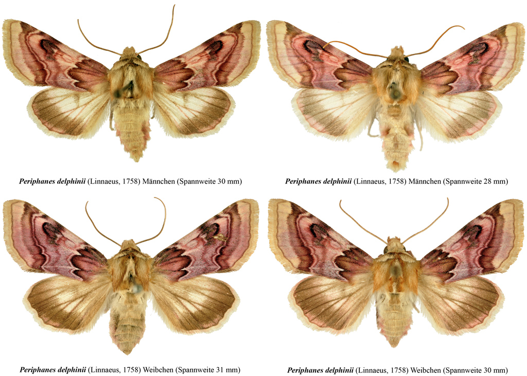 Read more about the article An illustrated checklist of the Austrian Noctuoidea
