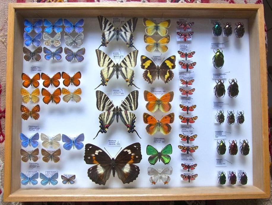 Read more about the article Boîtes entomologiques